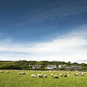Landscape Near East Prawle In England Poster