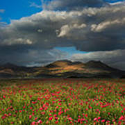 Landscape Of Poppy Fields In Front Of Mountain Range With Dramat Poster