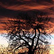 Large Cottonwood At Sunset Poster