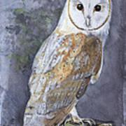 Large White Barn Owl Poster