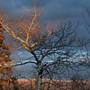 Last Light Last Leaves Poster
