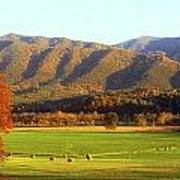 Late Autumn Afternoon In Cades Cove Poster