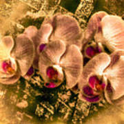 Late Summer Orchids Poster by Jill Balsam