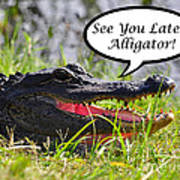 Later Alligator Greeting Card Poster