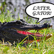Later Gator Greeting Card Poster by Al Powell Photography USA