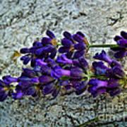 Lavender On White Stone Poster