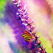 Lavender And Butterlies Poster