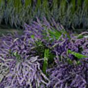 Lavender Bundles Poster
