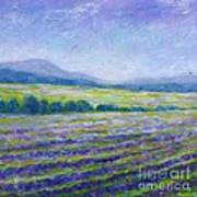 Lavender Field In Provence Poster