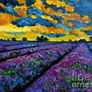 Lavender Fields At Dusk Poster