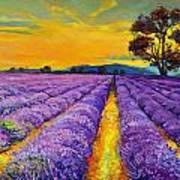 Lavender Poster by Ivailo Nikolov