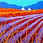 Lavender Meadow Poster by John  Nolan
