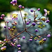 Lavender Mist Explosion Poster