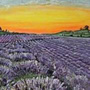 Lavender Oasis Poster