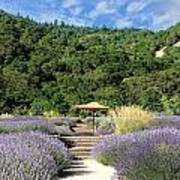 Lavender Path Poster