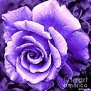 Lavender Rose With Brushstrokes Poster