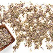 Lavender Seeds Poster