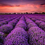 Lavender Sunset Poster