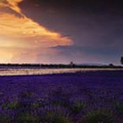 Lavender Thunderstorm Poster