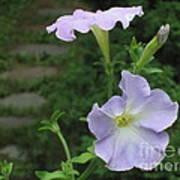 Lavender Whisper Poster