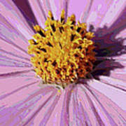 Layers Of A Cosmos Flower Poster