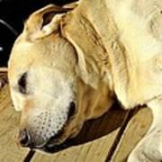 Lazy Farm Dog Poster