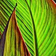 Leaf Abstract 4 Poster