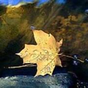 Leaf Afloat Poster