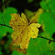 Leaf Caught On A Branch Poster