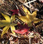 Leaf Collage Poster