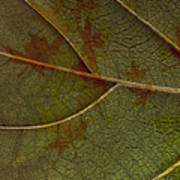 Leaf Design I Poster