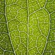 Leaf Lines V Poster