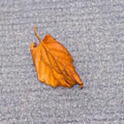 Leaf On Granite 1 Poster