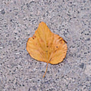 Leaf On Granite 2 - Square Poster