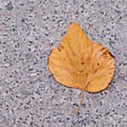 Leaf On Granite 2 Poster