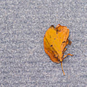 Leaf On Granite 3 Poster