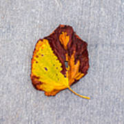 Leaf On Granite 5 - Square Poster