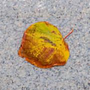 Leaf On Granite 6 - Square Poster