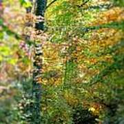 Leaf Path  Poster