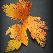 Leaf Portrait Poster