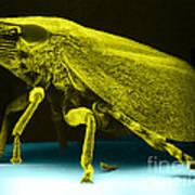 Leafhopper, Sem Poster