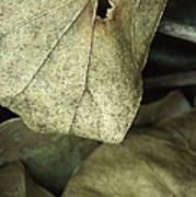 Leafpile 2 Poster
