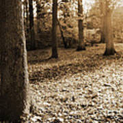 Leafy Autumn Woodland In Sepia Poster