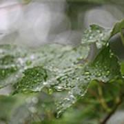 Leafy Raindrops Poster