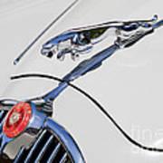 Leaping Jaguar Poster