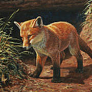 Red Fox Pup - Learning Poster