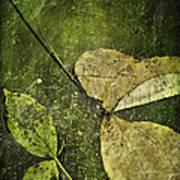 Leaves Afloat Poster