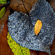 Leaves At Oak Openings Poster