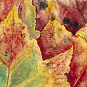 Leaves - Autumn Poster