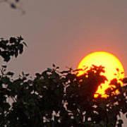 Leaves Cradling Setting Sun Poster